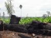 cambodia-cardamom-20130404-147