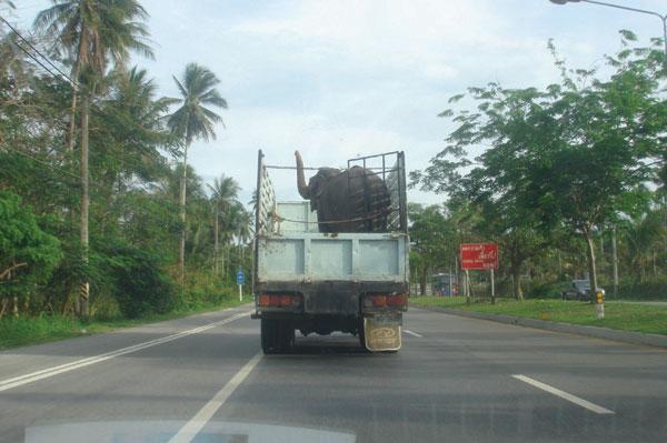 Tiertransport der besonderen Art