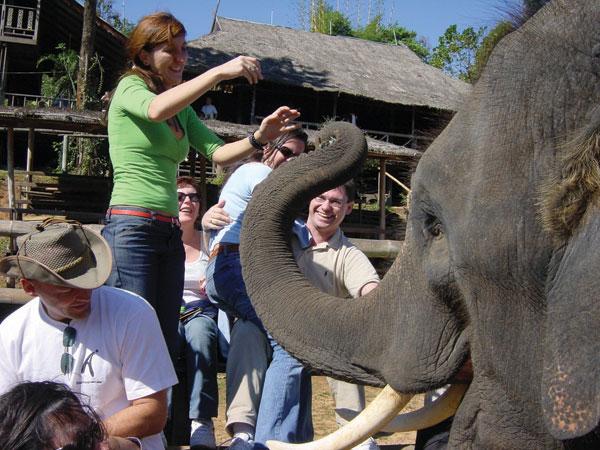 Der Schornsteinfeger unter den Tieren - Glücksfall Elefant