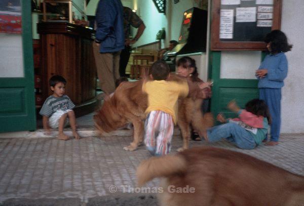 Kinder mit großen Hunden. Kein Problem.
