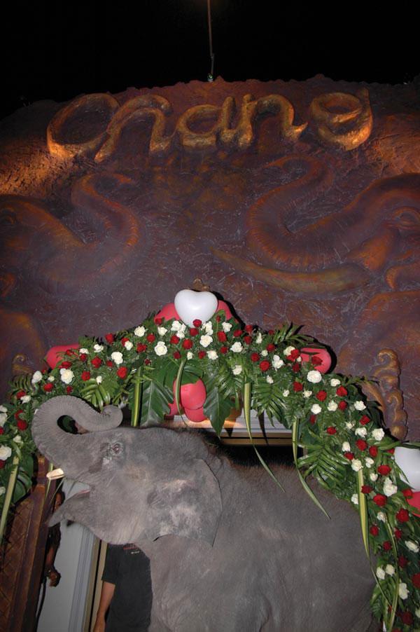 Chang heißt Elefant - Chang heißt das Starkbier Thailands - Wo Chang drauf steht muss Chang rein