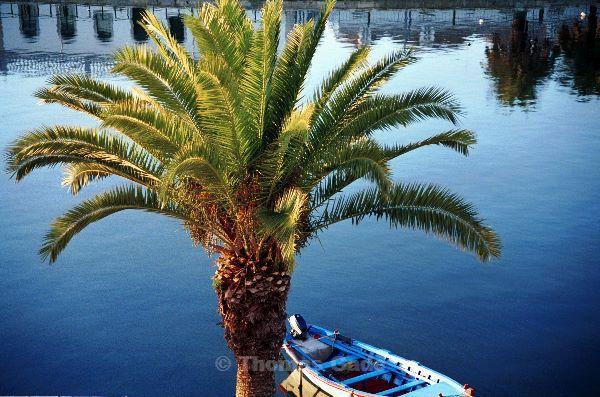Palme am Fluss