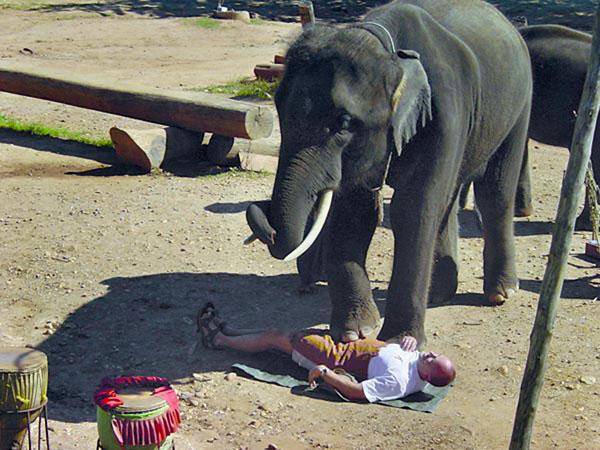 Alles unter dem Elefanten bringt Glück, wenn er will.