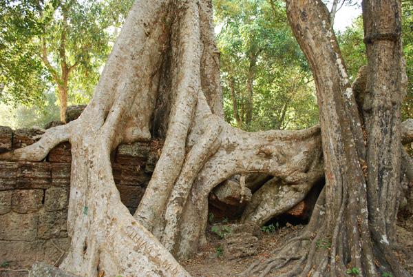 Die Bäume holen die Kultur, heute holt die Kultur die Bäume