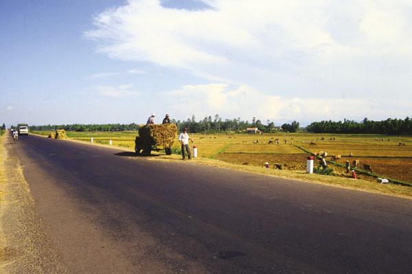 Kilometerlang an den Reisfeldern vorbei