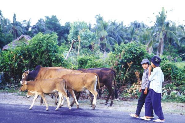 Der Tag geht zu Ende. Kinder bringen die Herde heim.