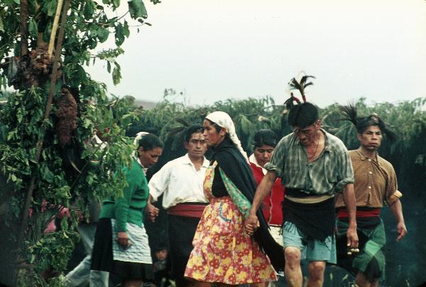 Ngillatun Alle Dorfbewohner haben sich geschmückt und tanzen um den Canelobaum.