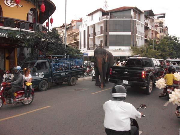 Elefanten in der Stadt