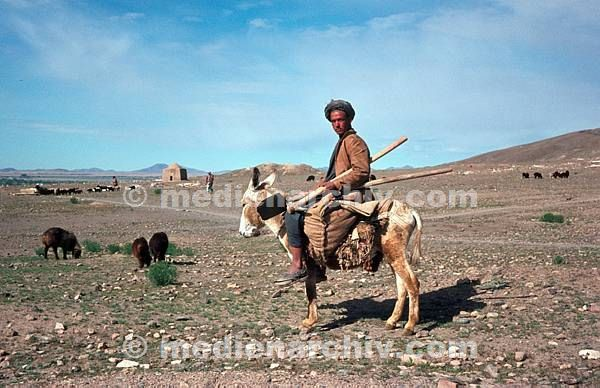 1968. Afghanistan. Mann auf einem Esel